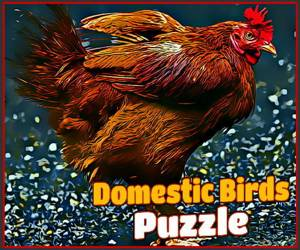 Domestic Birds Puzzle